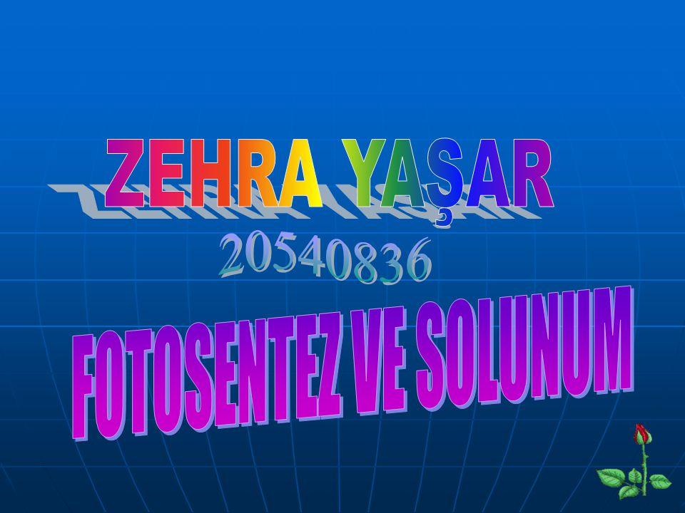 ZEHRA YAŞAR 20540836 FOTOSENTEZ VE SOLUNUM