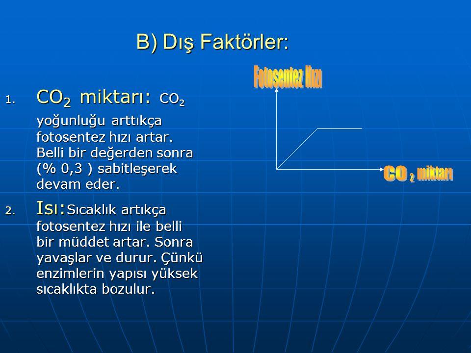 B) Dış Faktörler: Fotosentez Hızı