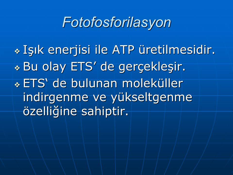 Fotofosforilasyon Işık enerjisi ile ATP üretilmesidir.