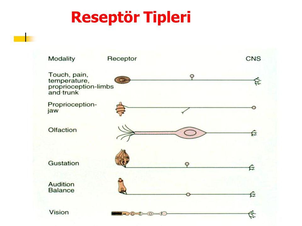 Reseptör Tipleri