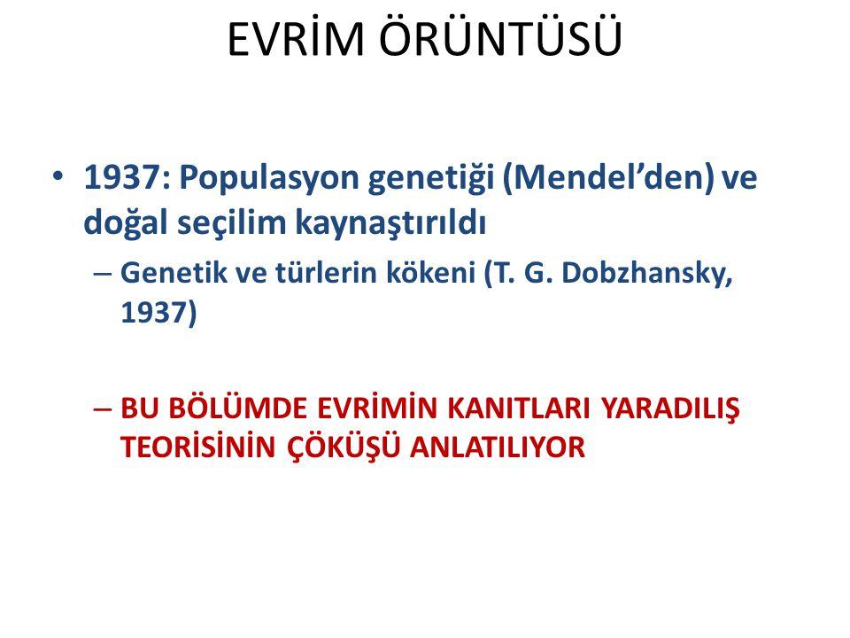 EVRİM ÖRÜNTÜSÜ 1937: Populasyon genetiği (Mendel'den) ve doğal seçilim kaynaştırıldı. Genetik ve türlerin kökeni (T. G. Dobzhansky, 1937)