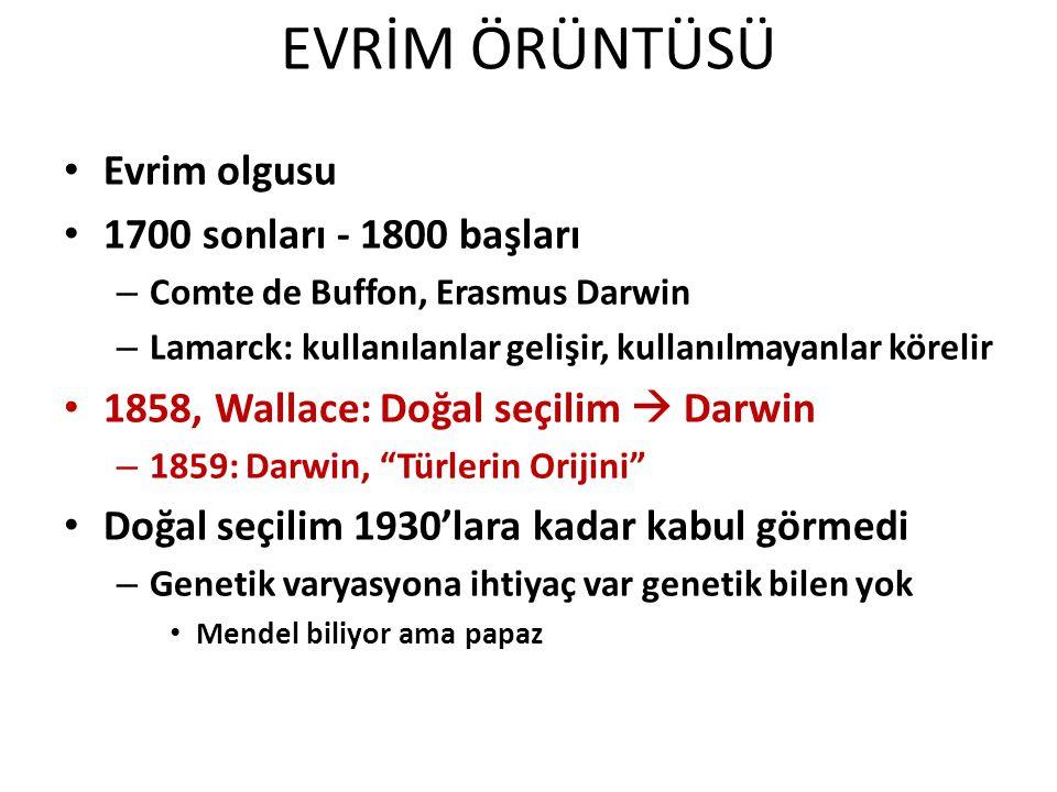 EVRİM ÖRÜNTÜSÜ Evrim olgusu 1700 sonları - 1800 başları