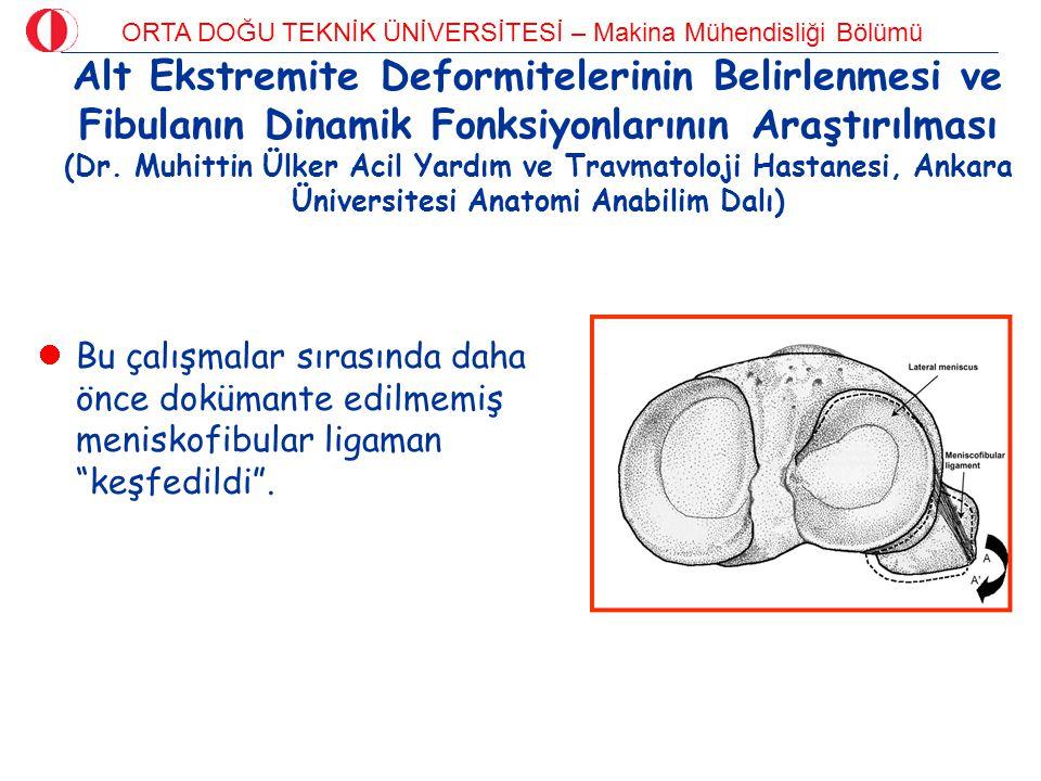 Alt Ekstremite Deformitelerinin Belirlenmesi ve Fibulanın Dinamik Fonksiyonlarının Araştırılması (Dr. Muhittin Ülker Acil Yardım ve Travmatoloji Hastanesi, Ankara Üniversitesi Anatomi Anabilim Dalı)