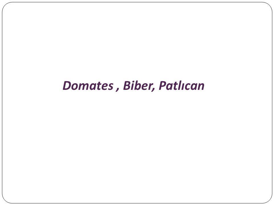 Domates , Biber, Patlıcan