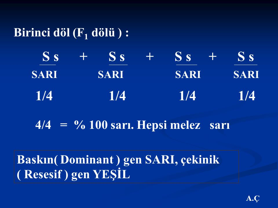 1/4 1/4 1/4 1/4 SARI SARI SARI SARI 4/4 = % 100 sarı. Hepsi melez sarı