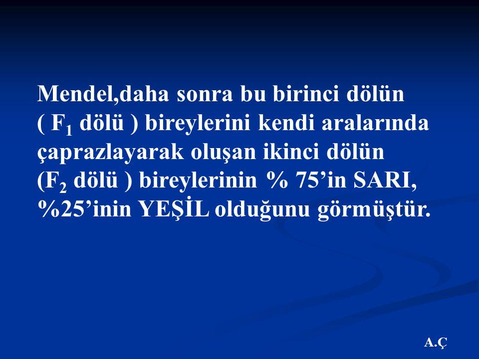 Mendel,daha sonra bu birinci dölün ( F1 dölü ) bireylerini kendi aralarında çaprazlayarak oluşan ikinci dölün (F2 dölü ) bireylerinin % 75'in SARI, %25'inin YEŞİL olduğunu görmüştür.
