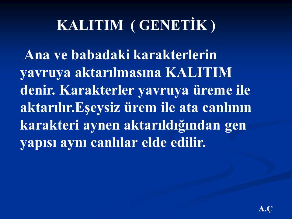 KALITIM ( GENETİK )
