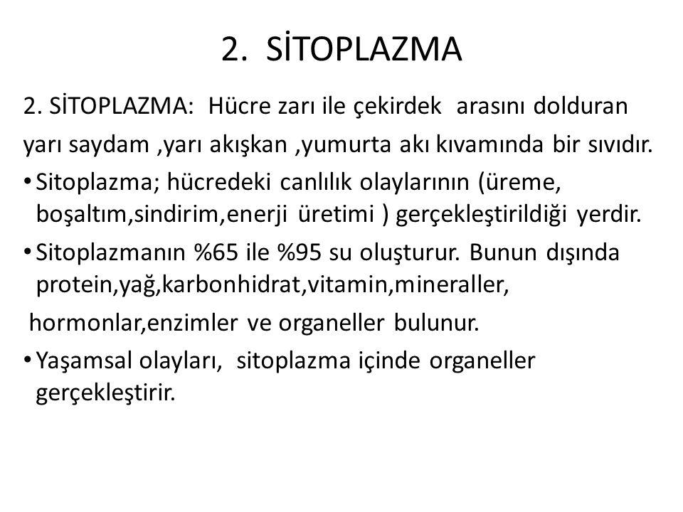 2. SİTOPLAZMA 2. SİTOPLAZMA: Hücre zarı ile çekirdek arasını dolduran