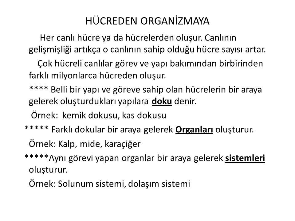 HÜCREDEN ORGANİZMAYA
