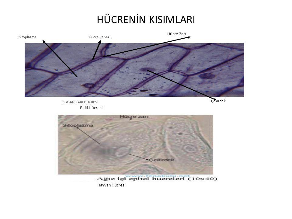 HÜCRENİN KISIMLARI Hücre Zarı Bitki Hücresi Hayvan Hücresi