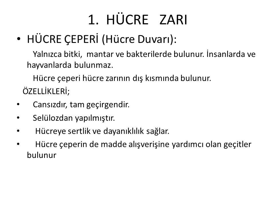 1. HÜCRE ZARI HÜCRE ÇEPERİ (Hücre Duvarı):