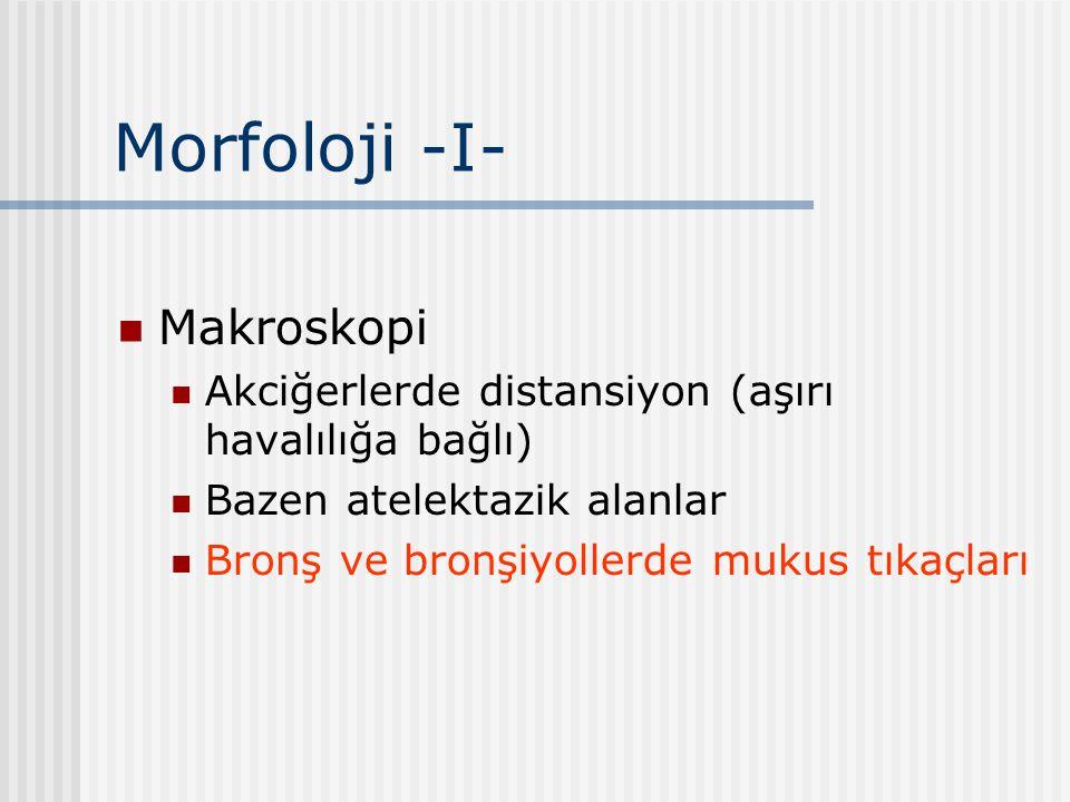 Morfoloji -I- Makroskopi