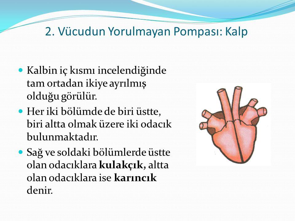 2. Vücudun Yorulmayan Pompası: Kalp
