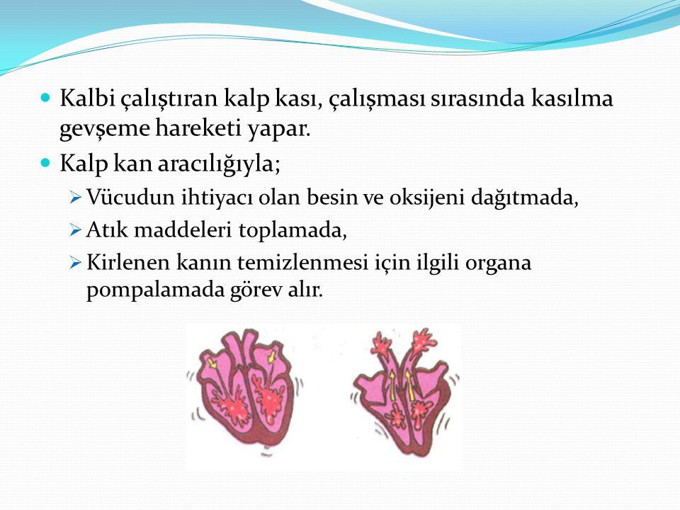 Kalp kan aracılığıyla;