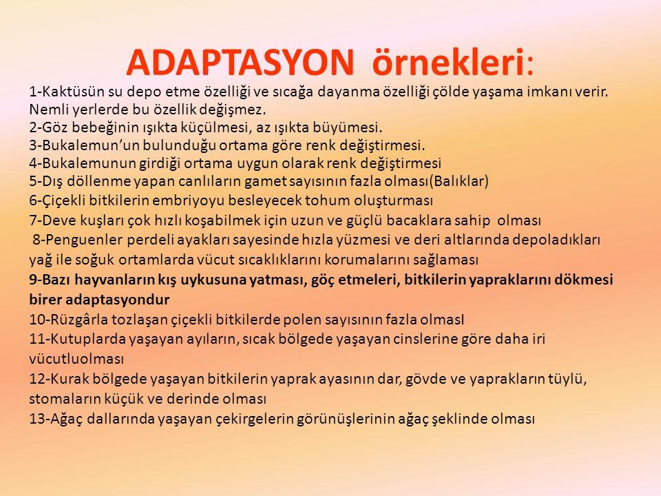 ADAPTASYON örnekleri: