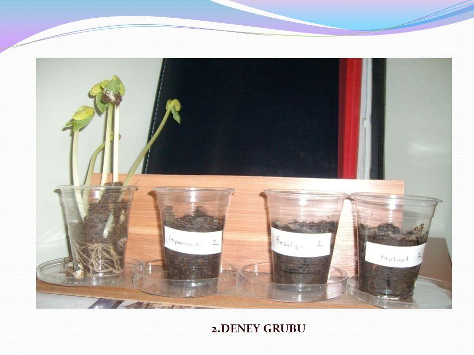 2.DENEY GRUBU