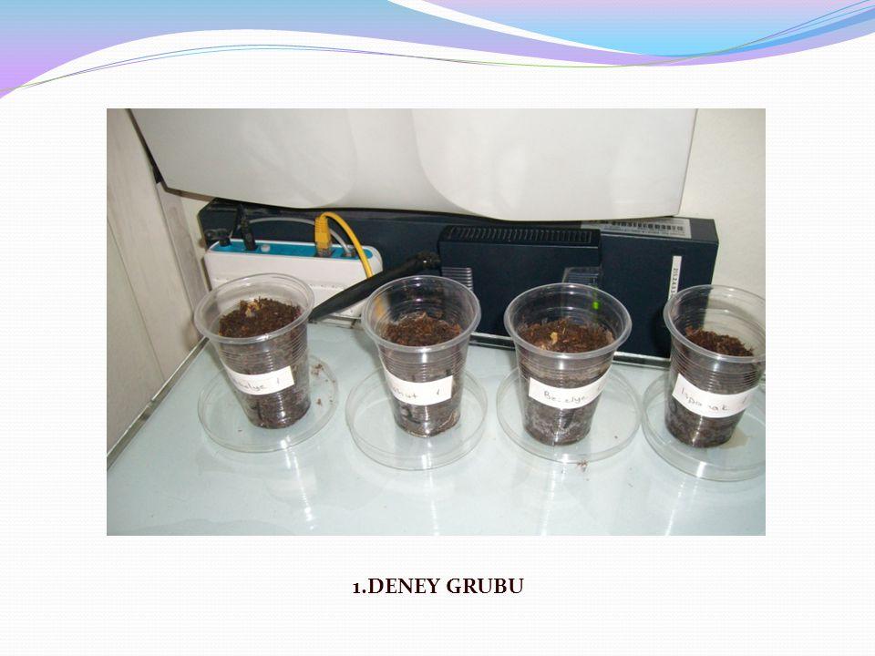1.DENEY GRUBU