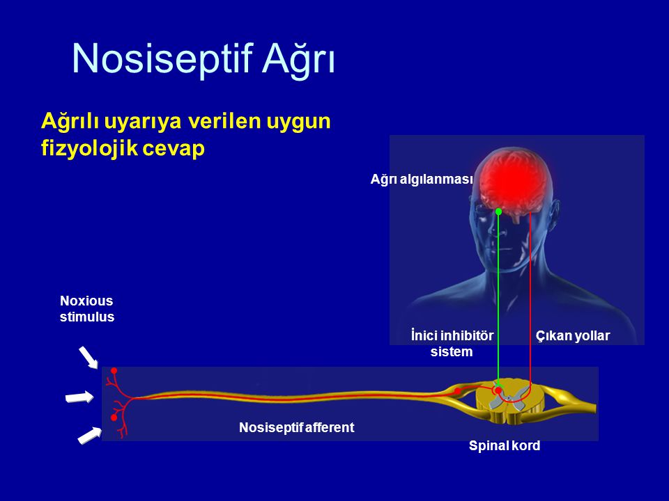 İnici inhibitör sistem