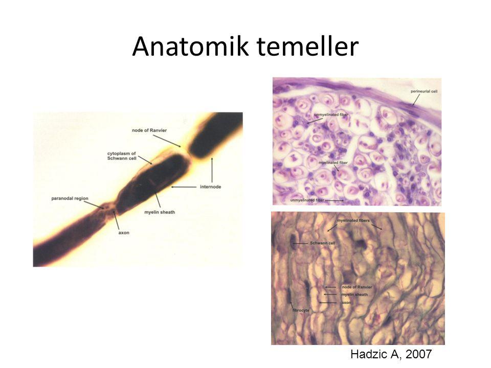 Anatomik temeller Hadzic A, 2007
