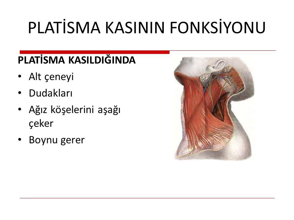 PLATİSMA KASININ FONKSİYONU