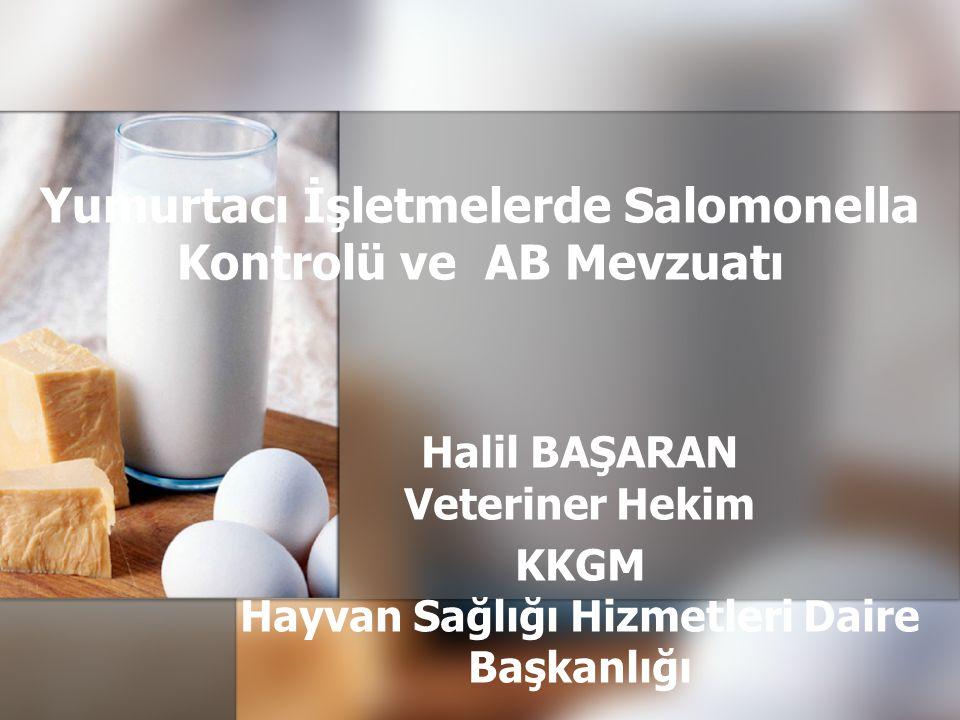 Yumurtacı İşletmelerde Salomonella Kontrolü ve AB Mevzuatı