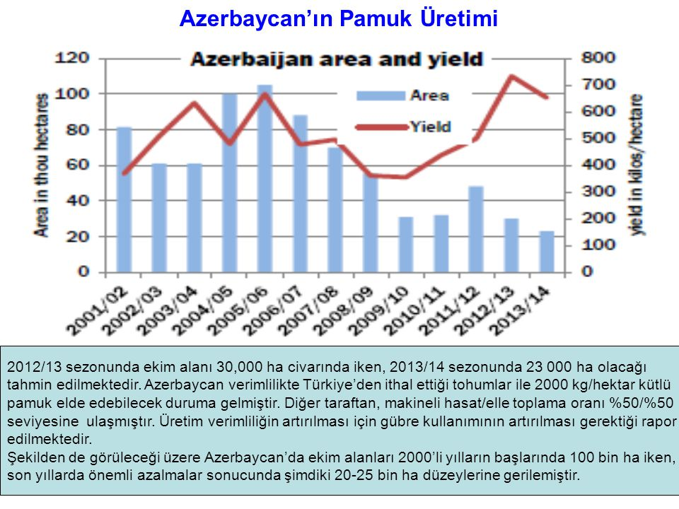 Azerbaycan'ın Pamuk Üretimi
