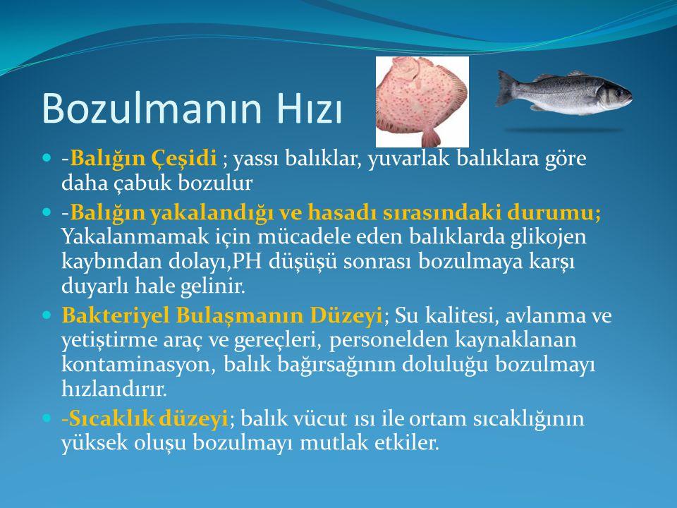 Bozulmanın Hızı -Balığın Çeşidi ; yassı balıklar, yuvarlak balıklara göre daha çabuk bozulur.