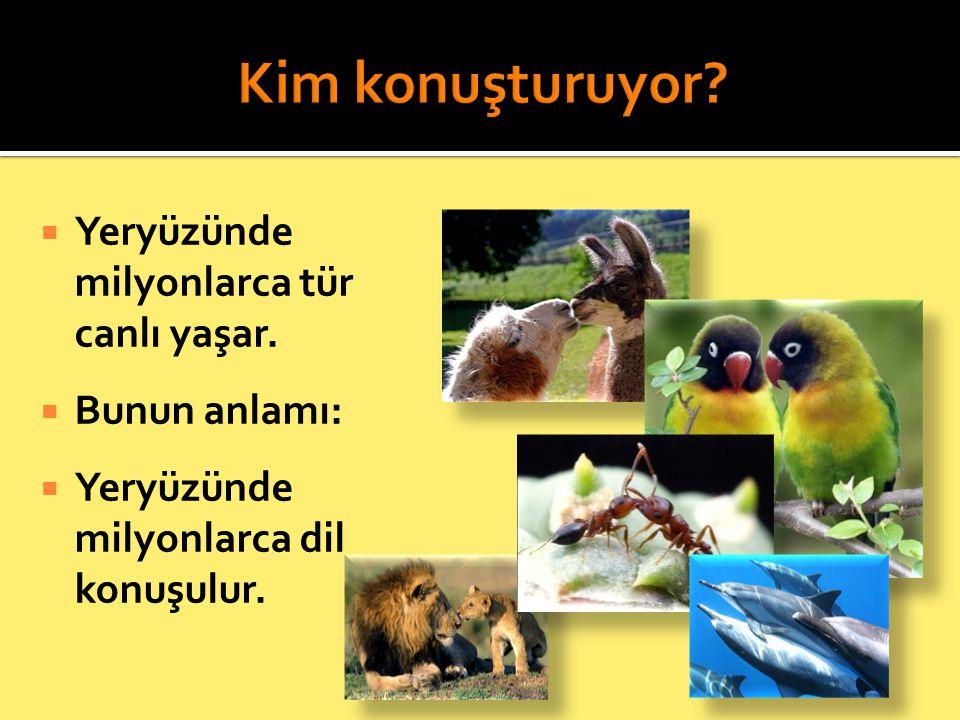 Kim konuşturuyor Yeryüzünde milyonlarca tür canlı yaşar.