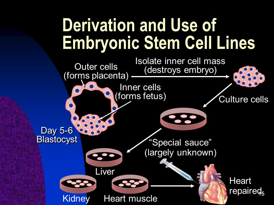 Derivation and Use of Embryonic Stem Cell Lines