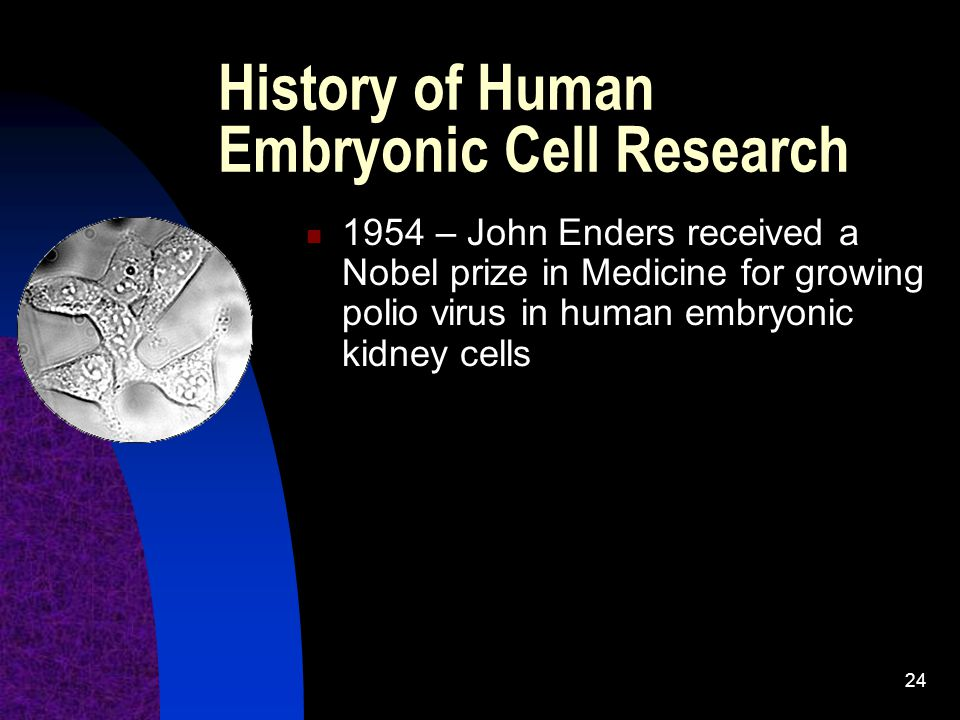 History of Human Embryonic Cell Research