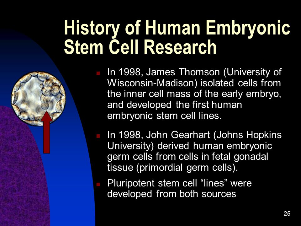 History of Human Embryonic Stem Cell Research