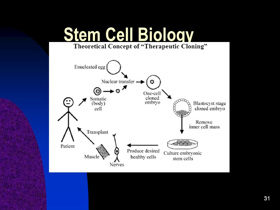 Stem Cell Biology The advantages of this = no tissue rejection.