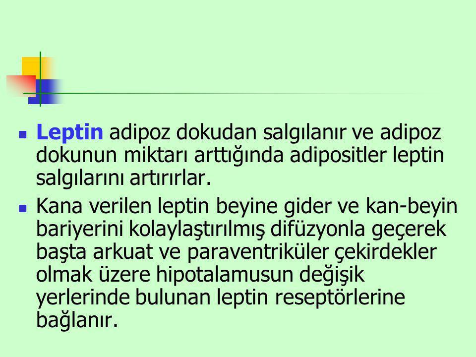 Leptin adipoz dokudan salgılanır ve adipoz dokunun miktarı arttığında adipositler leptin salgılarını artırırlar.