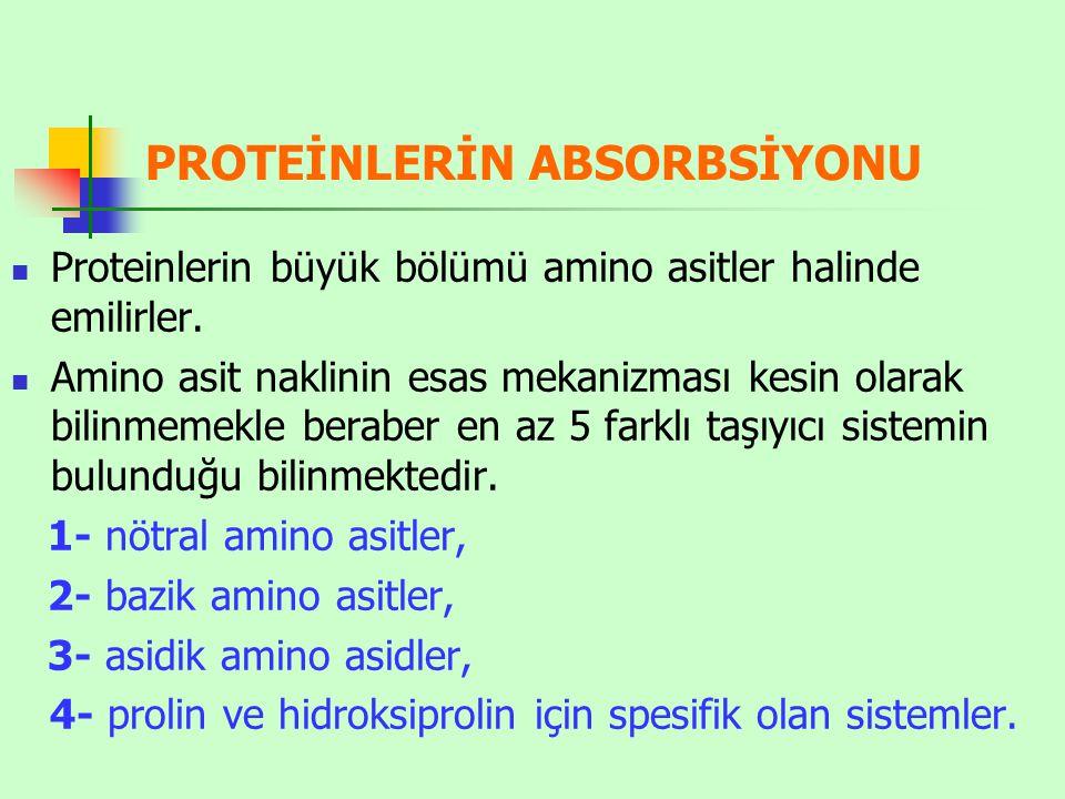 PROTEİNLERİN ABSORBSİYONU