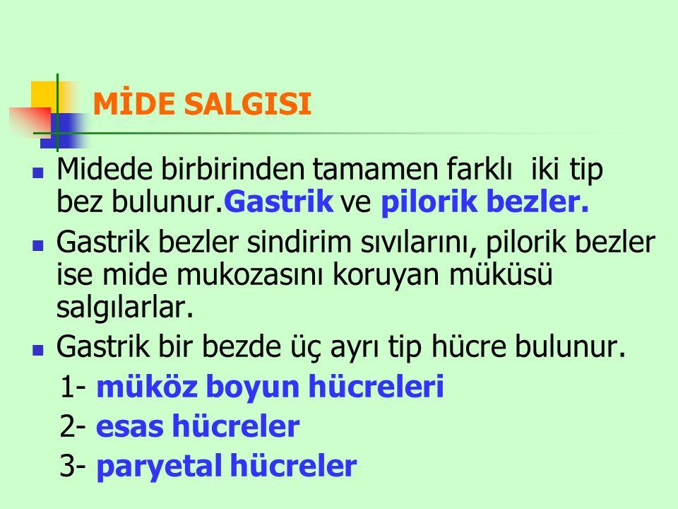 MİDE SALGISI Midede birbirinden tamamen farklı iki tip bez bulunur.Gastrik ve pilorik bezler.
