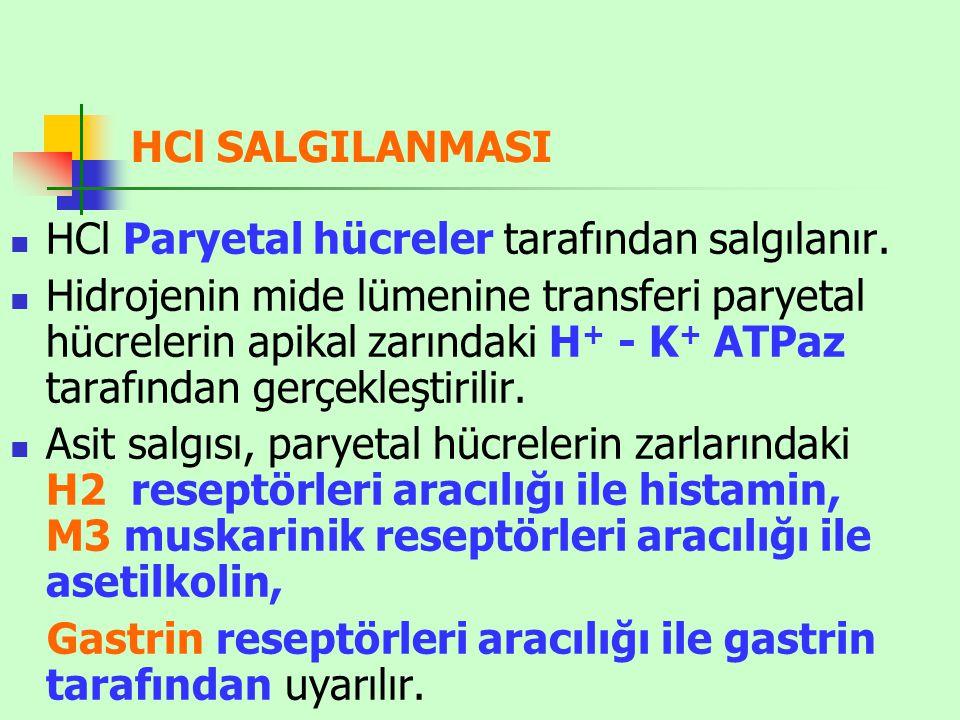 HCl SALGILANMASI HCl Paryetal hücreler tarafından salgılanır.