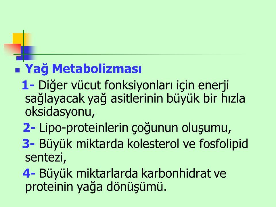 2- Lipo-proteinlerin çoğunun oluşumu,