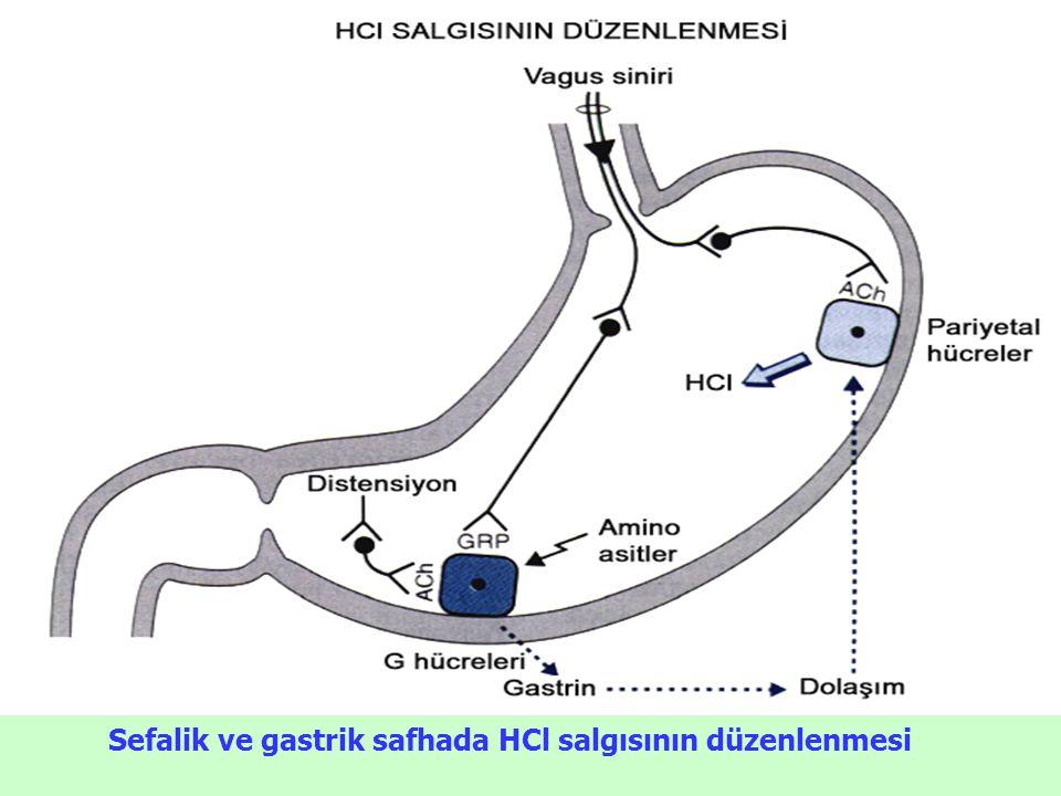Sefalik ve gastrik safhada HCl salgısının düzenlenmesi