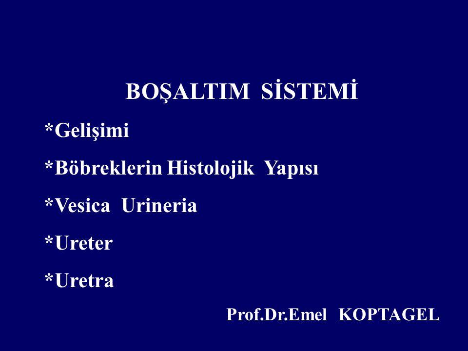 BOŞALTIM SİSTEMİ *Gelişimi *Böbreklerin Histolojik Yapısı