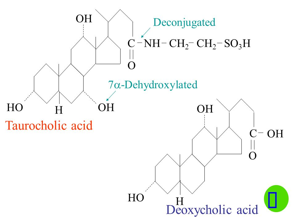 ü Taurocholic acid Deoxycholic acid OH Deconjugated C NH CH2 CH2 SO3H