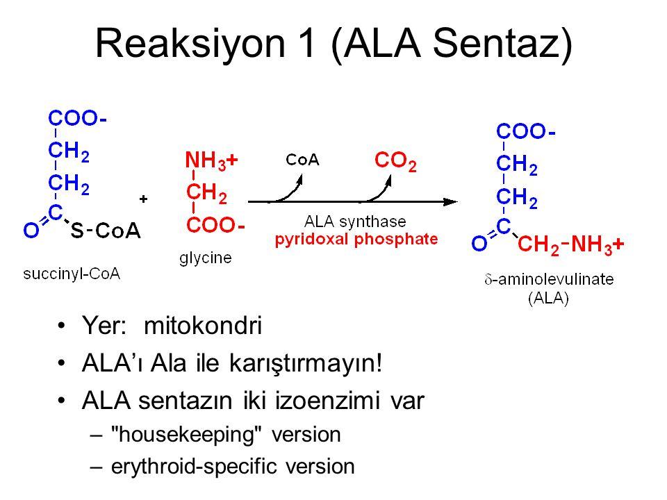 Reaksiyon 1 (ALA Sentaz)
