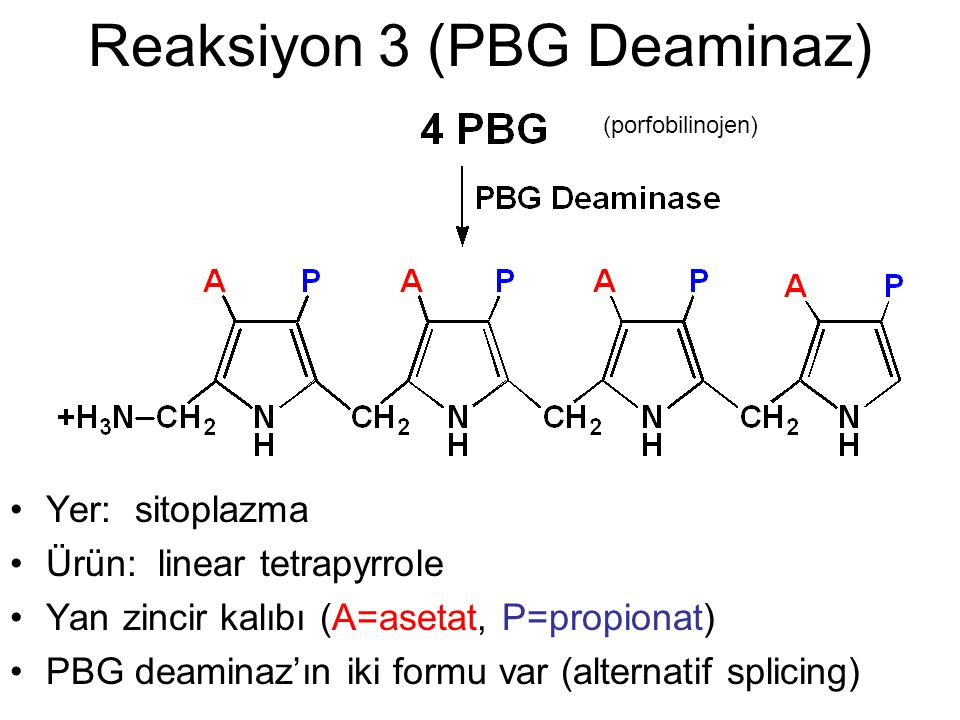 Reaksiyon 3 (PBG Deaminaz)