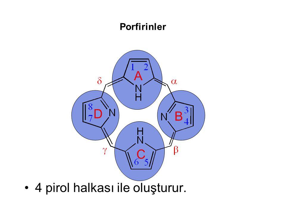 4 pirol halkası ile oluşturur.