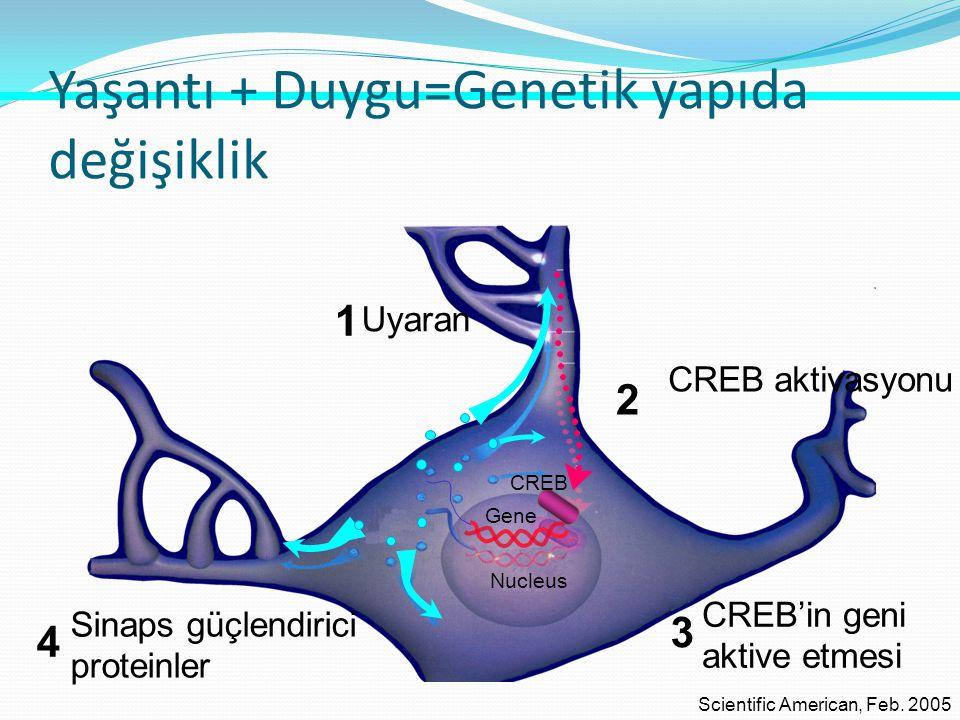 Yaşantı + Duygu=Genetik yapıda değişiklik