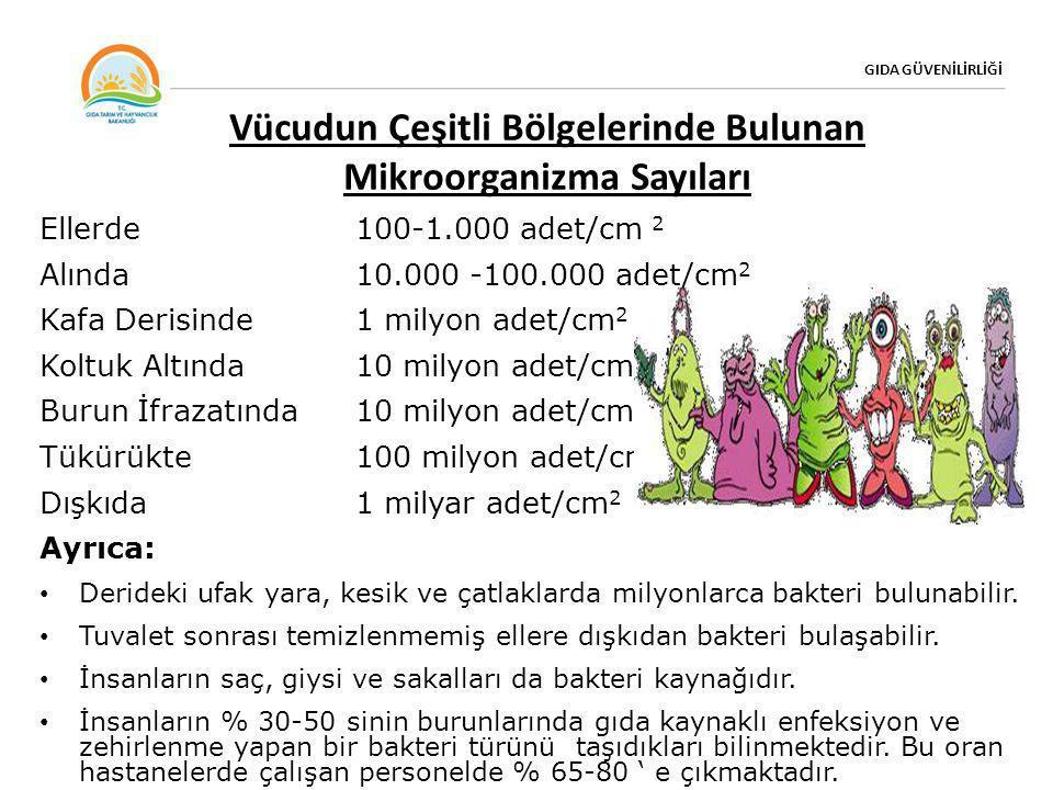 Vücudun Çeşitli Bölgelerinde Bulunan Mikroorganizma Sayıları