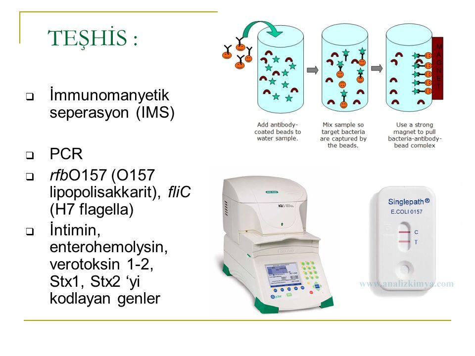 TEŞHİS : İmmunomanyetik seperasyon (IMS) PCR
