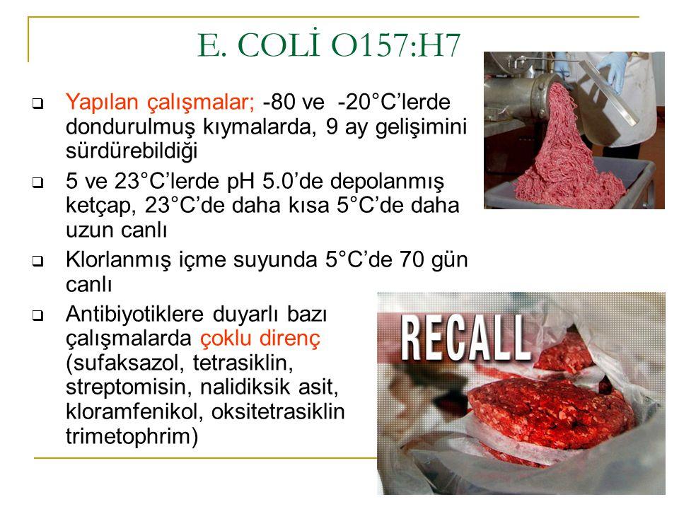 E. COLİ O157:H7 Yapılan çalışmalar; -80 ve -20°C'lerde dondurulmuş kıymalarda, 9 ay gelişimini sürdürebildiği.