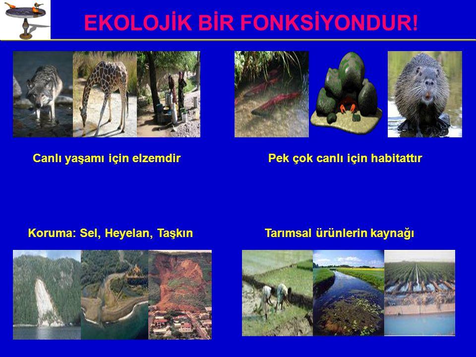 EKOLOJİK BİR FONKSİYONDUR!