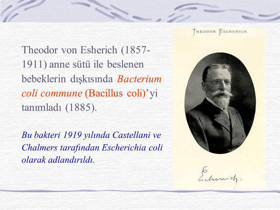 Theodor von Esherich (1857-1911) anne sütü ile beslenen bebeklerin dışkısında Bacterium coli commune (Bacillus coli)'yi tanımladı (1885).