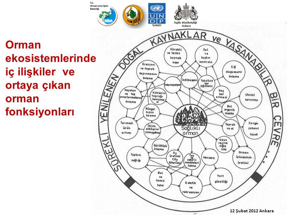 12 Şubat 2012 Ankara Orman ekosistemlerinde iç ilişkiler ve ortaya çıkan orman fonksiyonları